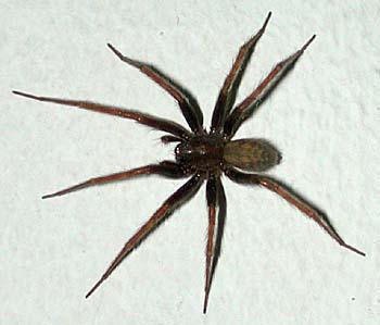 Een dikke spin - 1 part 4